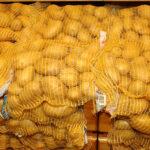 La producción europea de patata aumenta un 13,5%