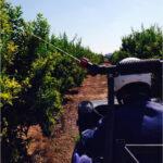 La Comunintat Valenciana inicia los tratamientos terrestres contra la mosca de la fruta en zonas citrícolas y de caqui