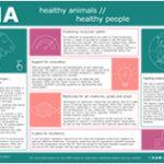 """""""Animales sanos, personas sanas"""", folleto de la Agencia Europea de Medicamentos"""