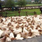 Publicados en Cantabria los requisitos para la emisión de documentos de movimiento de ganado